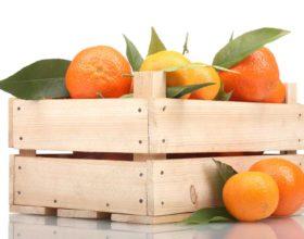 ¡Hora de comprar citricos en verano!
