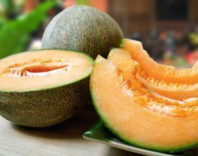 Época para comprar melon