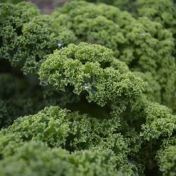 col rizada o col kale - Fruteria de Valencia