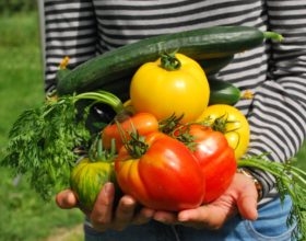 Frutería ecológica, más sabor, más salud